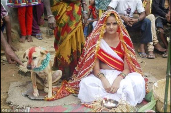 Phong tục kỳ lạ: Người kết hôn với thú cưng để xua đuổi tà ma - Ảnh 1.