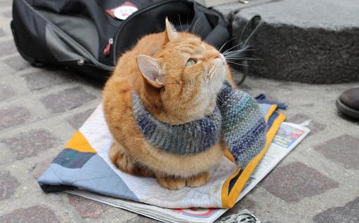 Cứu 1 con mèo hoang, người đàn ông bất ngờ đổi đời theo cách không ai nghĩ đến