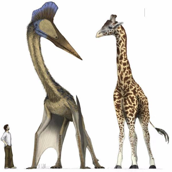 Thằn lằn bay Quetzalcoatlus – Sinh vật khiến khủng long T-rex phải khiếp sợ - Ảnh 2.