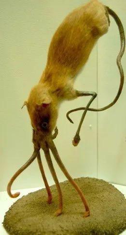 1001 thắc mắc: Loài động vật kì lạ nào có chân nhưng lại dùng mũi để di chuyển? - Ảnh 1.
