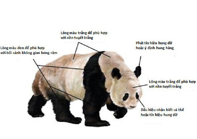 1001 thắc mắc: Vì sao gấu trúc khổng lồ nhưng sinh con lại bé xíu? - Ảnh 3.