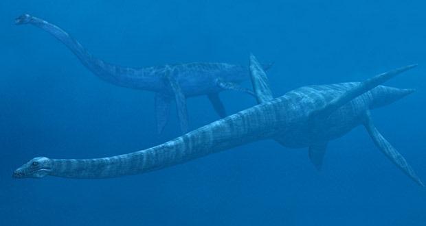 Top 10 sinh vật siêu khổng lồ thời tiền sử dễ bị nhầm thành khủng long - Ảnh 3.
