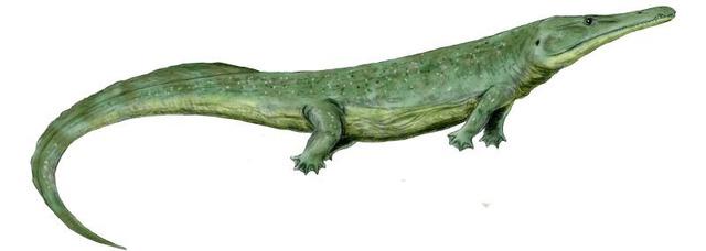 Top 10 sinh vật siêu khổng lồ thời tiền sử dễ bị nhầm thành khủng long - Ảnh 7.