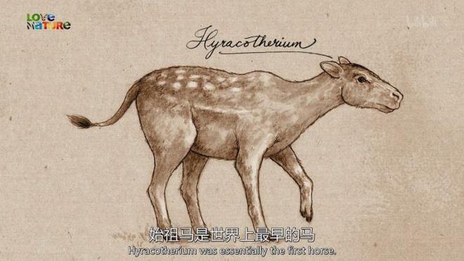 Vì sự ảnh hưởng của con người, một số động vật thậm chí đã bắt đầu đảo ngược quá trình tiến hóa - Ảnh 11.