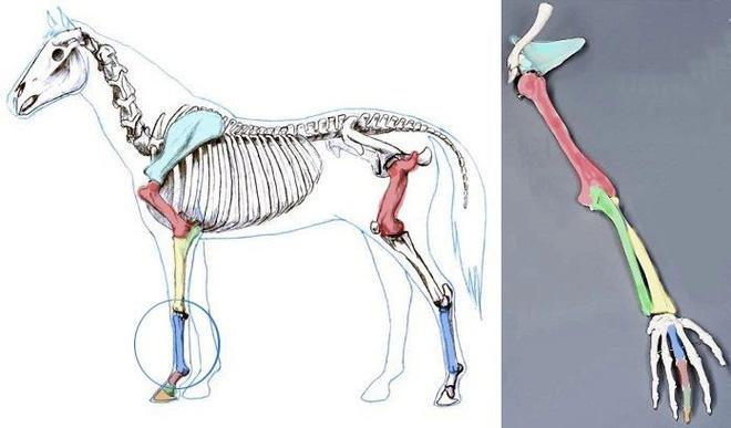Vì sự ảnh hưởng của con người, một số động vật thậm chí đã bắt đầu đảo ngược quá trình tiến hóa - Ảnh 14.
