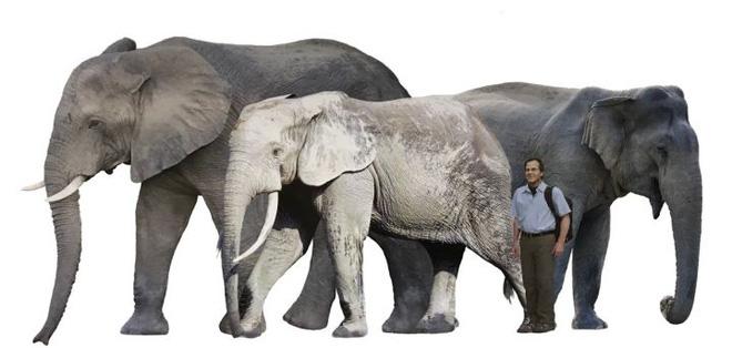 Vì sự ảnh hưởng của con người, một số động vật thậm chí đã bắt đầu đảo ngược quá trình tiến hóa - Ảnh 2.