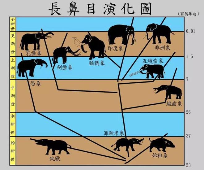 Vì sự ảnh hưởng của con người, một số động vật thậm chí đã bắt đầu đảo ngược quá trình tiến hóa - Ảnh 3.