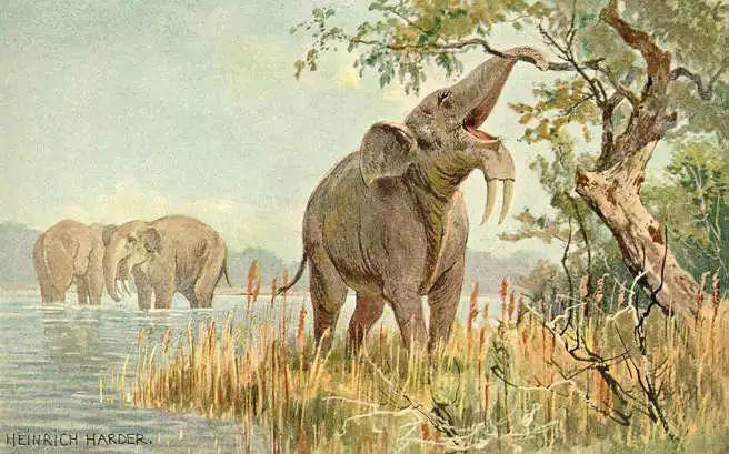 Vì sự ảnh hưởng của con người, một số động vật thậm chí đã bắt đầu đảo ngược quá trình tiến hóa - Ảnh 4.
