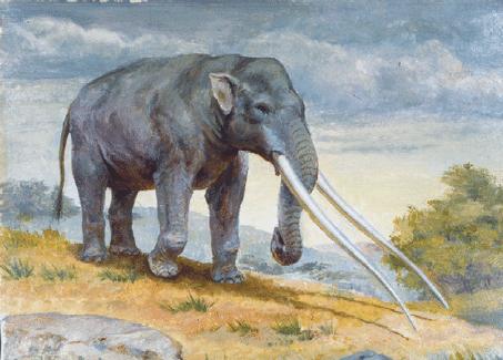 Vì sự ảnh hưởng của con người, một số động vật thậm chí đã bắt đầu đảo ngược quá trình tiến hóa - Ảnh 6.