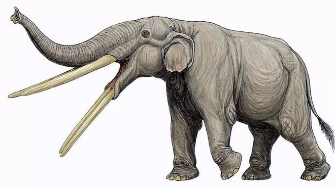 Vì sự ảnh hưởng của con người, một số động vật thậm chí đã bắt đầu đảo ngược quá trình tiến hóa - Ảnh 7.