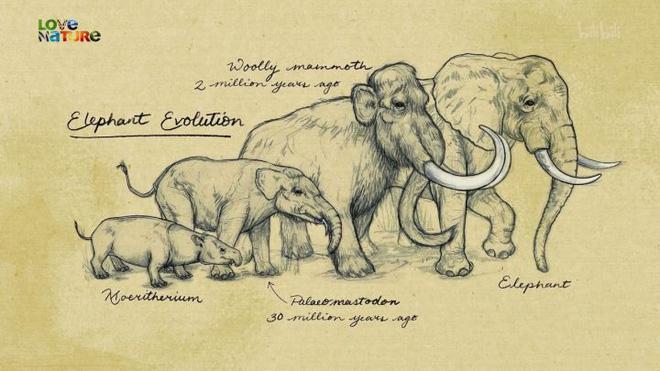 Vì sự ảnh hưởng của con người, một số động vật thậm chí đã bắt đầu đảo ngược quá trình tiến hóa - Ảnh 8.