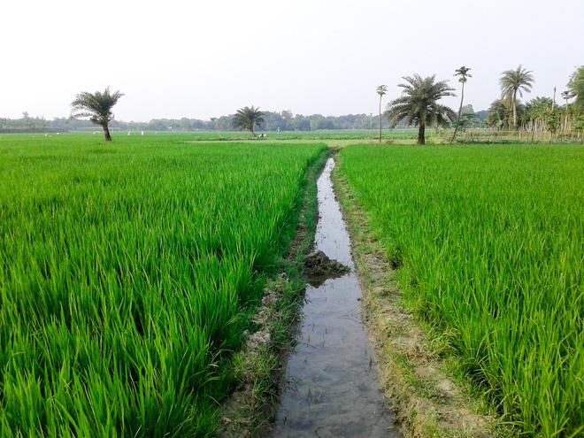 Nghiên cứu mới: CO2 tăng, chất lượng dinh dưỡng trong hạt gạo sẽ giảm, nguy cơ ảnh hưởng tới hàng tỷ người - Ảnh 3.
