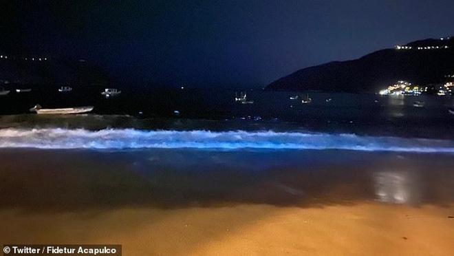 Mặt biển phát sáng sau 60 năm, cá sấu tràn lên bờ ở Mexico giữa lúc cả nước phong tỏa vì dịch Covid-19 - Ảnh 1.