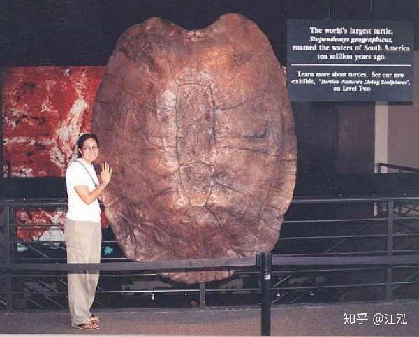 Phát hiện loài rùa cổ đại lớn nhất từng tồn tại trên Trái Đất - Ảnh 1.