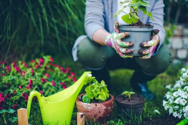5 lợi ích sức khỏe vô giá khi trồng cây trong nhà: Muốn khỏe mạnh hãy sớm dựa vào cây! - Ảnh 5.