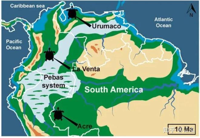 Phát hiện loài rùa cổ đại lớn nhất từng tồn tại trên Trái Đất - Ảnh 10.