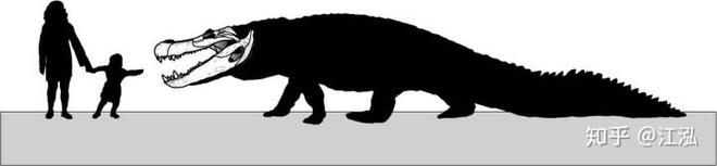 Phát hiện loài rùa cổ đại lớn nhất từng tồn tại trên Trái Đất - Ảnh 7.