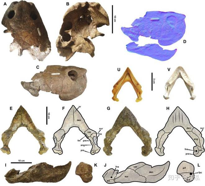 Phát hiện loài rùa cổ đại lớn nhất từng tồn tại trên Trái Đất - Ảnh 8.