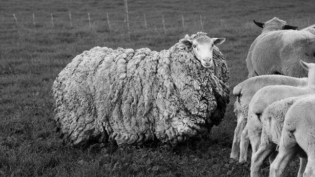 Ra ngoài mở tiệc thịt nướng, gia đình kinh ngạc khi gặp lại con vật thất lạc 7 năm - Ảnh 2.