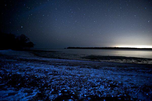 Video: Thủy quái phát sáng trên biển California thách thức giới khoa học sinh vật biển - Ảnh 4.
