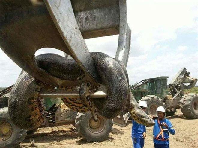 Thiên nhiên kỳ bí: Khám phá nơi trú ngụ của siêu quái thú trăn khổng lồ nặng hơn 500kg - Ảnh 2.