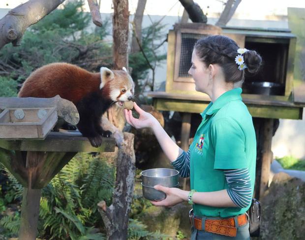 Thương động vật côi cút mùa Covid-19, nhân viên khu bảo tồn quyết ở lại cách ly cùng chúng suốt 3 tháng - Ảnh 5.