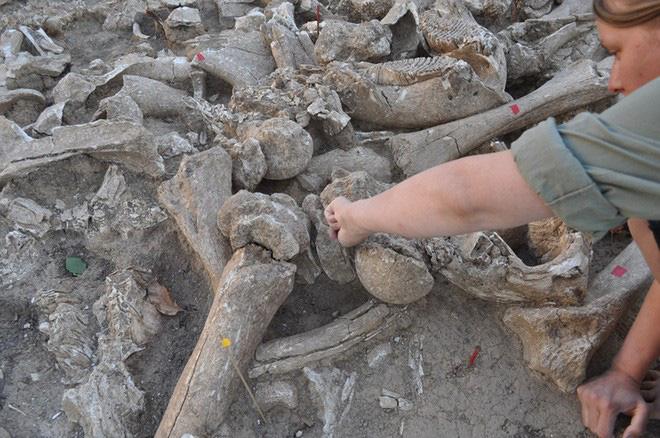 Đẹp độc lạ: Người tiền sử xây nhà sống qua Kỷ băng hà từ xương quái thú nặng 9 tấn? - Ảnh 3.