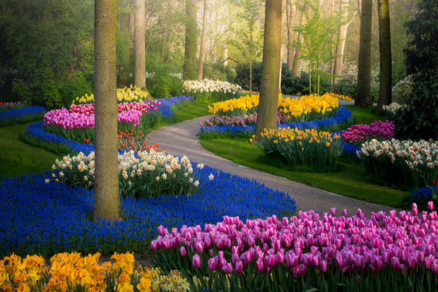 Vườn hoa đẹp nhất thế giới đóng cửa sau 71 năm, nhiếp ảnh gia tò mò muốn vào bên trong thì choáng ngợp với cảnh tượng trước mắt - Ảnh 3.