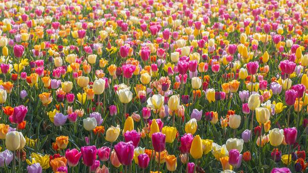Vườn hoa đẹp nhất thế giới đóng cửa sau 71 năm, nhiếp ảnh gia tò mò muốn vào bên trong thì choáng ngợp với cảnh tượng trước mắt - Ảnh 13.