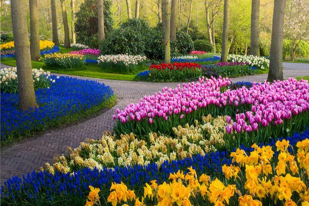 Vườn hoa đẹp nhất thế giới đóng cửa sau 71 năm, nhiếp ảnh gia tò mò muốn vào bên trong thì choáng ngợp với cảnh tượng trước mắt - Ảnh 14.