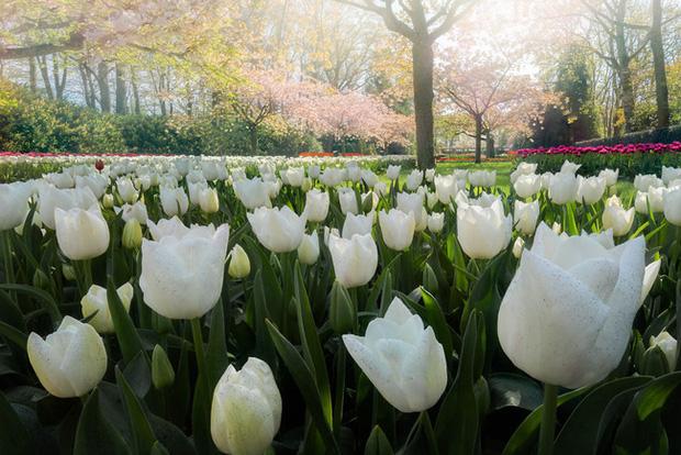 Vườn hoa đẹp nhất thế giới đóng cửa sau 71 năm, nhiếp ảnh gia tò mò muốn vào bên trong thì choáng ngợp với cảnh tượng trước mắt - Ảnh 16.
