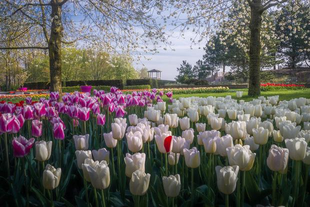 Vườn hoa đẹp nhất thế giới đóng cửa sau 71 năm, nhiếp ảnh gia tò mò muốn vào bên trong thì choáng ngợp với cảnh tượng trước mắt - Ảnh 20.