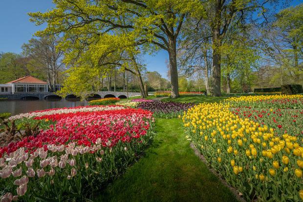 Vườn hoa đẹp nhất thế giới đóng cửa sau 71 năm, nhiếp ảnh gia tò mò muốn vào bên trong thì choáng ngợp với cảnh tượng trước mắt - Ảnh 21.