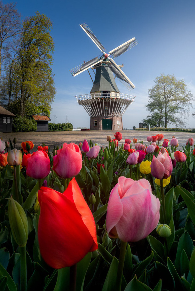 Vườn hoa đẹp nhất thế giới đóng cửa sau 71 năm, nhiếp ảnh gia tò mò muốn vào bên trong thì choáng ngợp với cảnh tượng trước mắt - Ảnh 4.