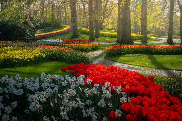 Vườn hoa đẹp nhất thế giới đóng cửa sau 71 năm, nhiếp ảnh gia tò mò muốn vào bên trong thì choáng ngợp với cảnh tượng trước mắt - Ảnh 23.