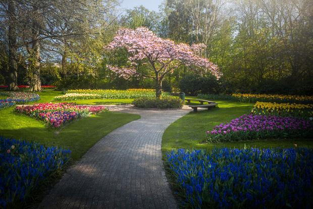 Vườn hoa đẹp nhất thế giới đóng cửa sau 71 năm, nhiếp ảnh gia tò mò muốn vào bên trong thì choáng ngợp với cảnh tượng trước mắt - Ảnh 24.