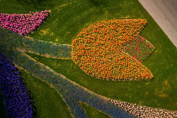 Vườn hoa đẹp nhất thế giới đóng cửa sau 71 năm, nhiếp ảnh gia tò mò muốn vào bên trong thì choáng ngợp với cảnh tượng trước mắt - Ảnh 8.
