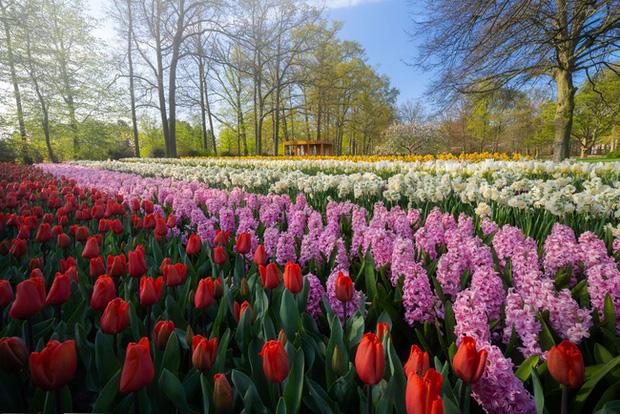 Vườn hoa đẹp nhất thế giới đóng cửa sau 71 năm, nhiếp ảnh gia tò mò muốn vào bên trong thì choáng ngợp với cảnh tượng trước mắt - Ảnh 10.