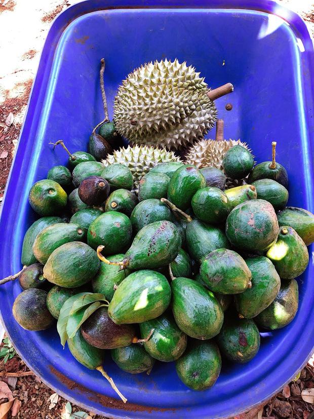Lý Nhã Kỳ ở nhà làm nông mùa dịch: Giản dị đội nón lá, diện đồ ngủ đi hái trái cây trên nông trại 50 hecta ở Đà Lạt - Ảnh 3.