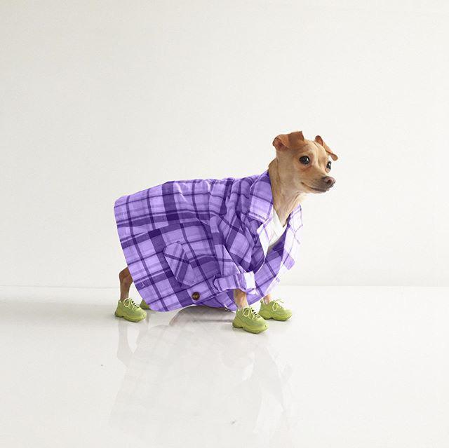 Gặp gỡ chú chó Chihuahua sành điệu nhất thế giới:  Diện đồ hiệu như fashionista thực thụ và có gần 100.000 người hâm mộ trên mạng xã hội - Ảnh 18.