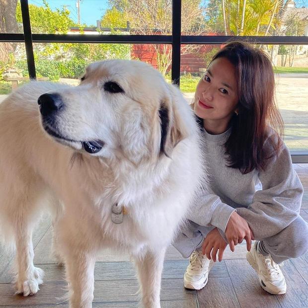 Lý do vì sao ly hôn tới gần 9 tháng với Song Hye Kyo mà bây giờ Song Joong Ki mới cho phá căn nhà tân hôn? - ảnh 4
