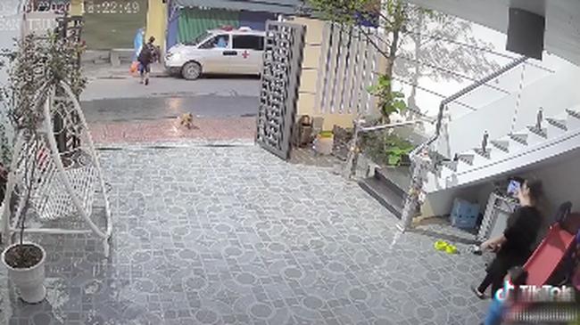 Đoạn clip về chú chó trung thành tiễn chủ đi cách ly, suốt nhiều ngày liên tục đứng đợi ngoài cổng ngóng chủ trở về - ảnh 1