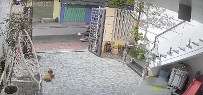 Đoạn clip về chú chó trung thành tiễn chủ đi cách ly, suốt nhiều ngày liên tục đứng đợi ngoài cổng ngóng chủ trở về - ảnh 2