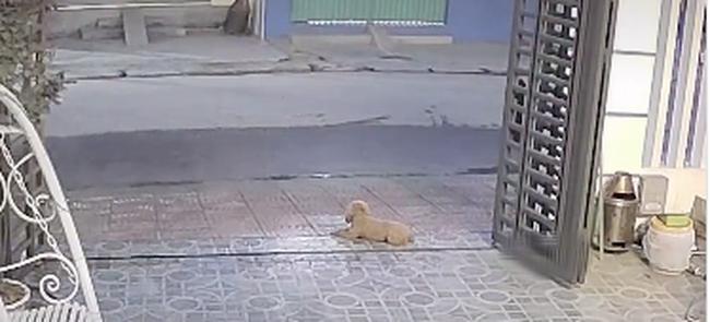 Đoạn clip về chú chó trung thành tiễn chủ đi cách ly, suốt nhiều ngày liên tục đứng đợi ngoài cổng ngóng chủ trở về - ảnh 3