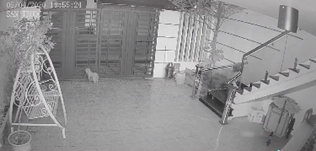 Đoạn clip về chú chó trung thành tiễn chủ đi cách ly, suốt nhiều ngày liên tục đứng đợi ngoài cổng ngóng chủ trở về - ảnh 4