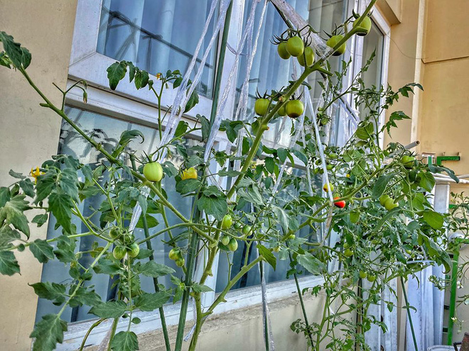 Loạt sao Vbiz hoá bác nông dân tự trồng trọt và chăn nuôi mùa dịch: Choáng nhất là khu vườn trong biệt thự 21 tỷ của Quyền Linh! - Ảnh 2.