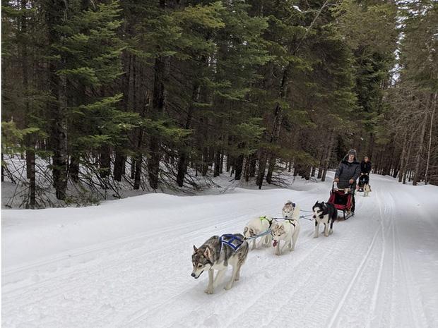 Cô gái sử dụng đàn chó kéo xe trượt tuyết để giao hàng cho người cao tuổi, giúp họ khỏi phải ra ngoài mua sắm - Ảnh 1.