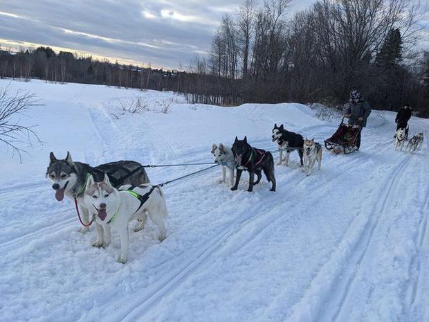 Cô gái sử dụng đàn chó kéo xe trượt tuyết để giao hàng cho người cao tuổi, giúp họ khỏi phải ra ngoài mua sắm - Ảnh 3.