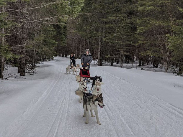 Cô gái sử dụng đàn chó kéo xe trượt tuyết để giao hàng cho người cao tuổi, giúp họ khỏi phải ra ngoài mua sắm - Ảnh 4.