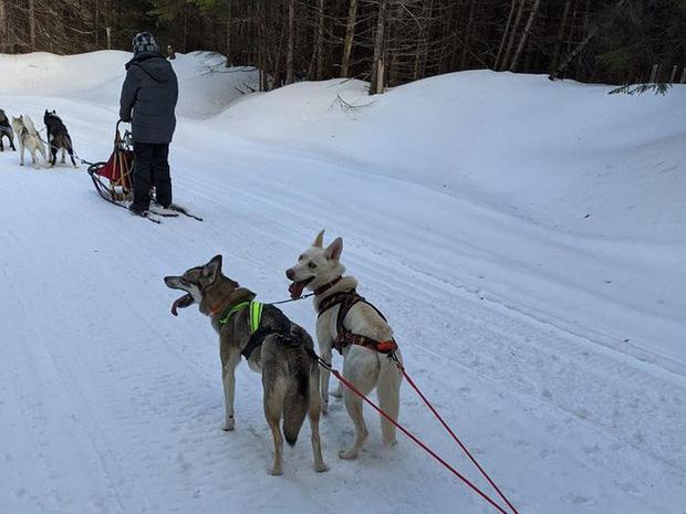 Cô gái sử dụng đàn chó kéo xe trượt tuyết để giao hàng cho người cao tuổi, giúp họ khỏi phải ra ngoài mua sắm - Ảnh 7.